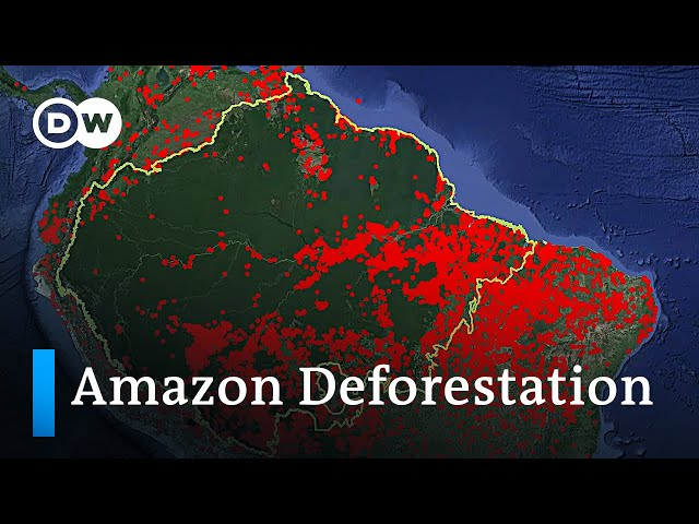 Who is responsible for the Amazon deforestation fires in Brazil? | DW Analysis
