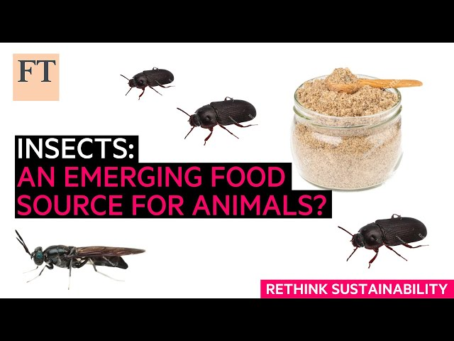 Insects: an emerging protein source for animal feed | Rethink Sustainability