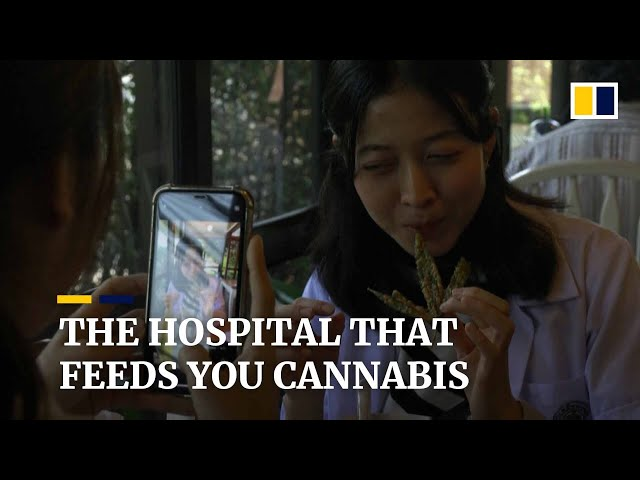 Thailand hospital introduces cannabis into their restaurant food menu