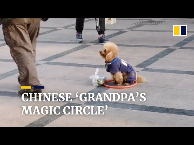 Chinese 'grandpa's magic circle' stops his dog from running away