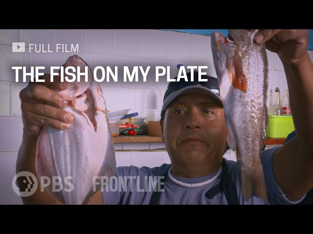 The Fish on My Plate (full documentary)