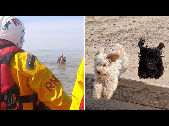 RNLI rescue woman and two dogs from sea after tide cuts off route to shore