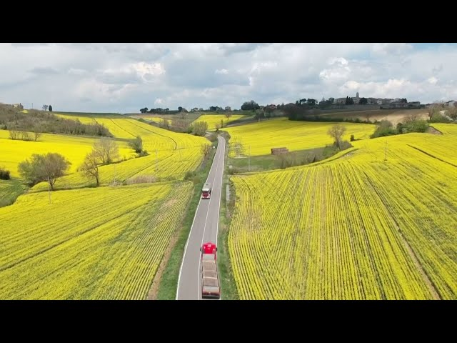 Rapeseed flowers cover Italian countryside in yellow