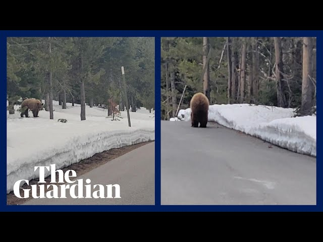 'I'm not your food': US jogger reasons with bear in face-off
